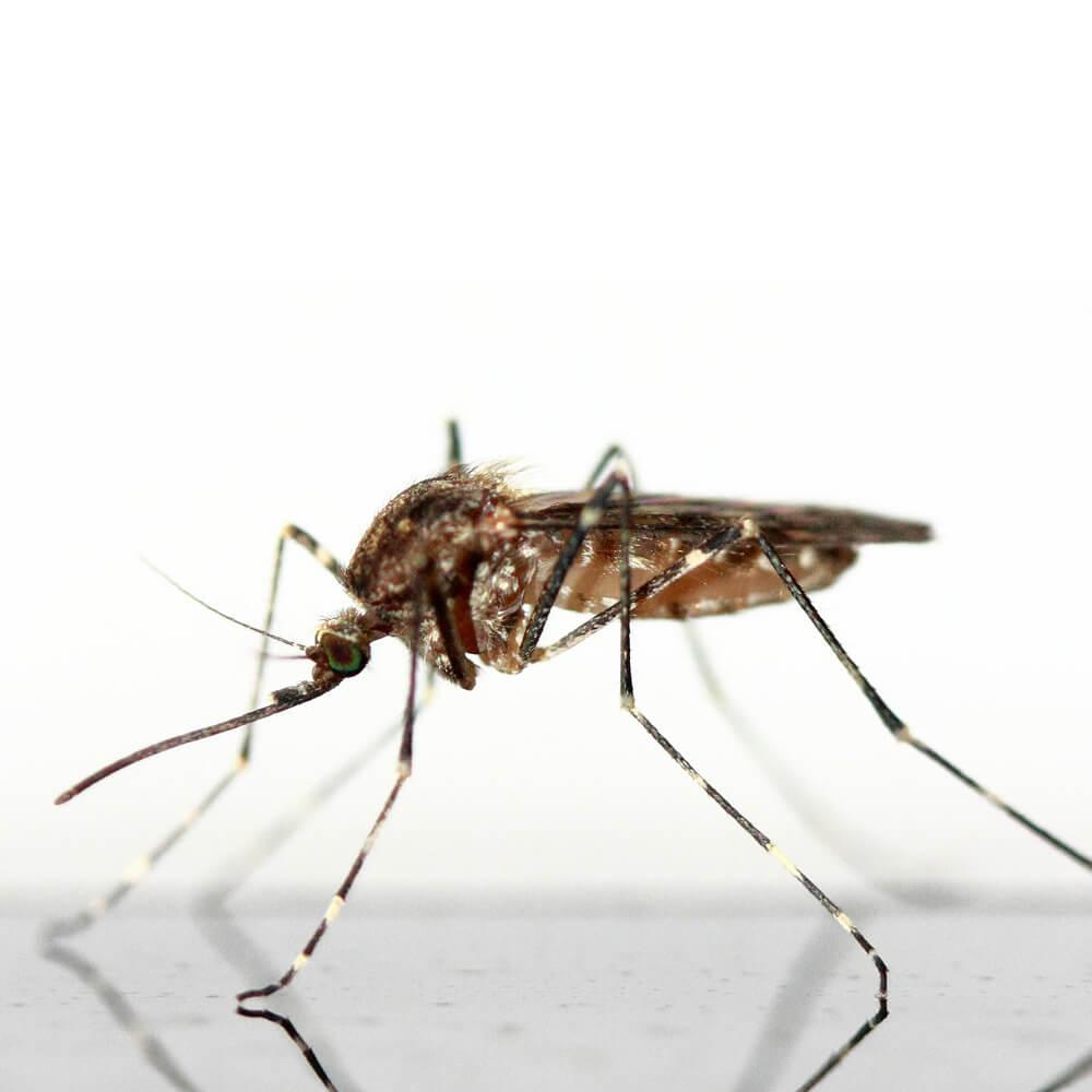Mückenstich Baby